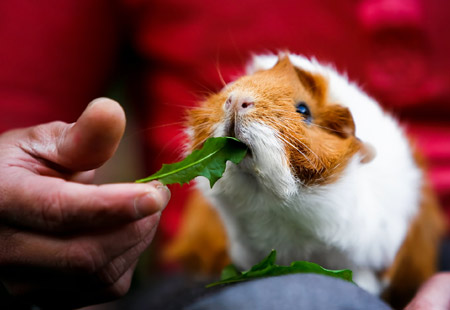 exotic pet care services, lake view, chicago